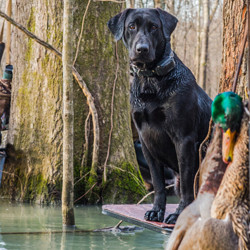 Water Dog Hunting Supplies And Accessories Macks Pw