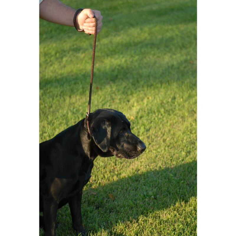 Avery Leather Line Dog Lead