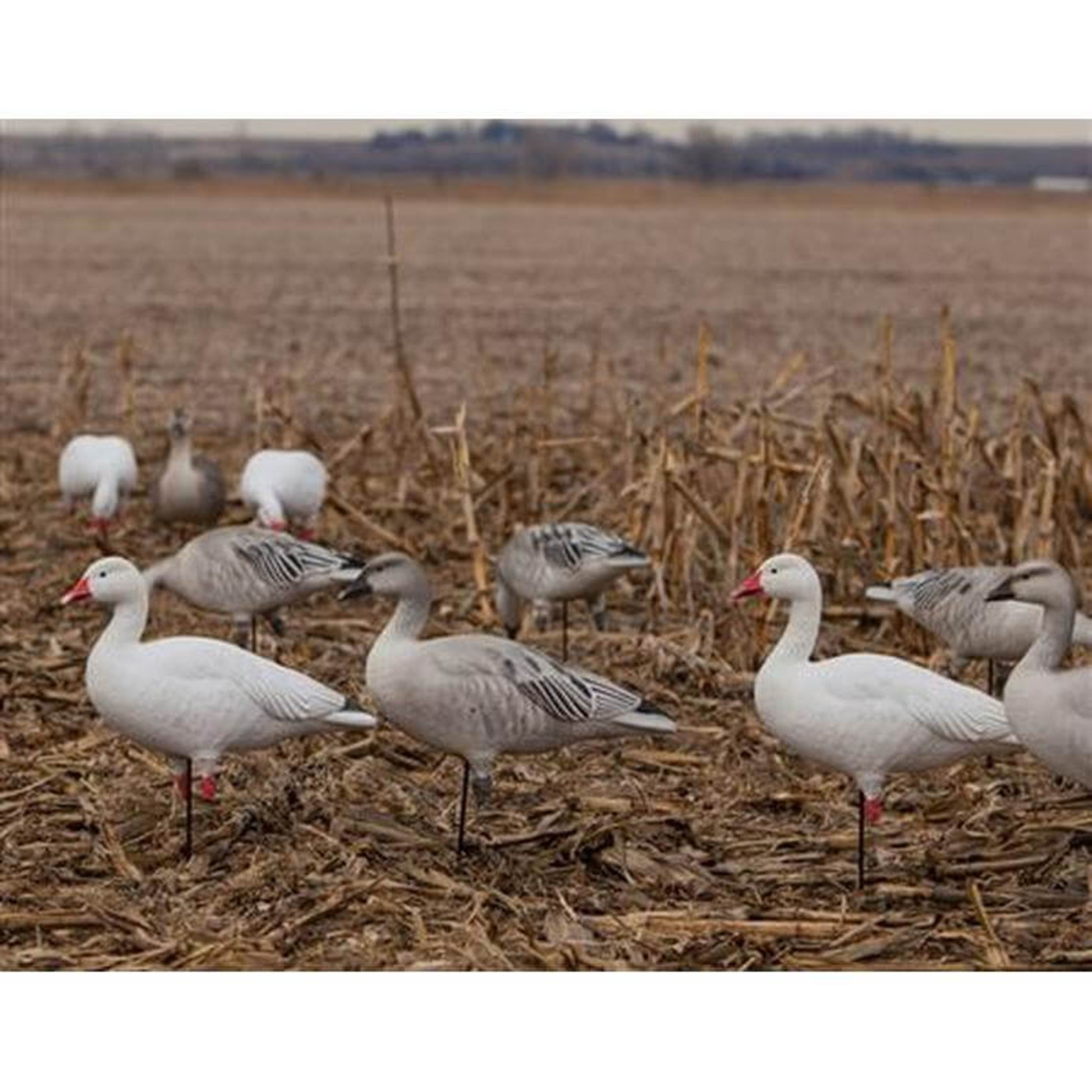 GHG Pro-Grade Full Body Blue Goose Decoys - 6 Pack