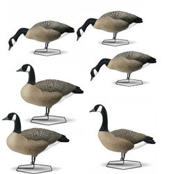 DOA Decoys Rogue Series Full Body Canada Goose Decoys - 6 Pack