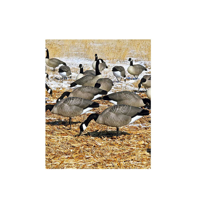 DOA Decoys Rogue Series Full Body Canada Goose Feeder Decoys - 6 Pack