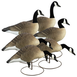Higdon Alpha Magnum Canada Goose Decoys Full Body Variety 6 Pack
