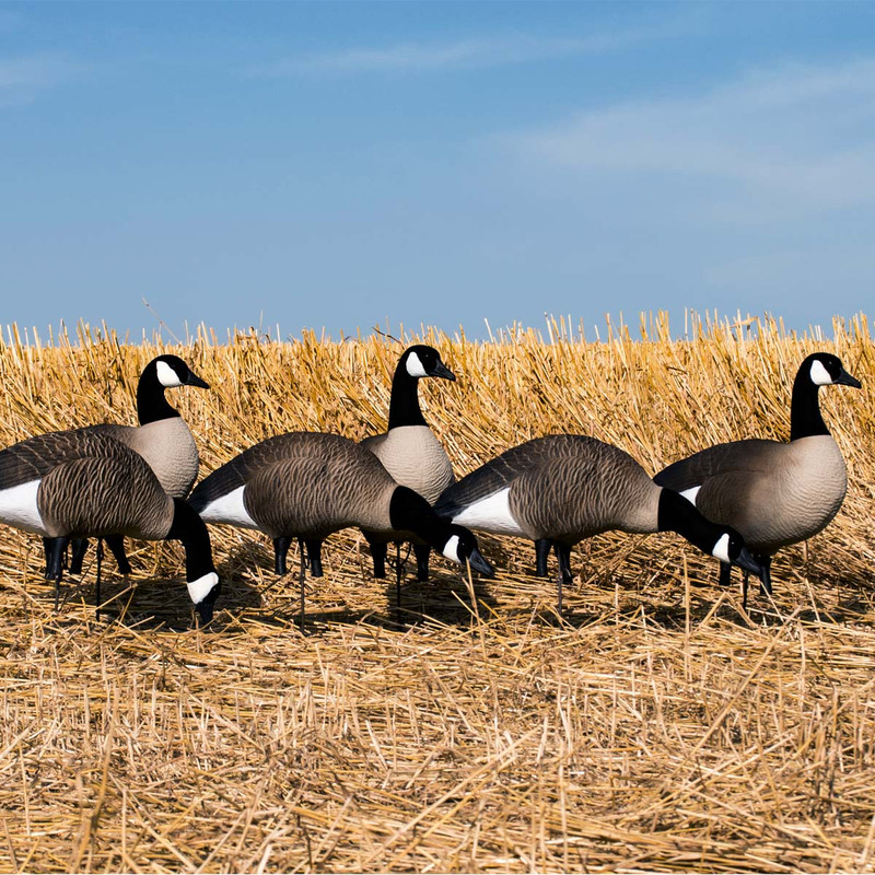 Higdon Canada Full Size Full Body Variety Decoys - 6 Pack