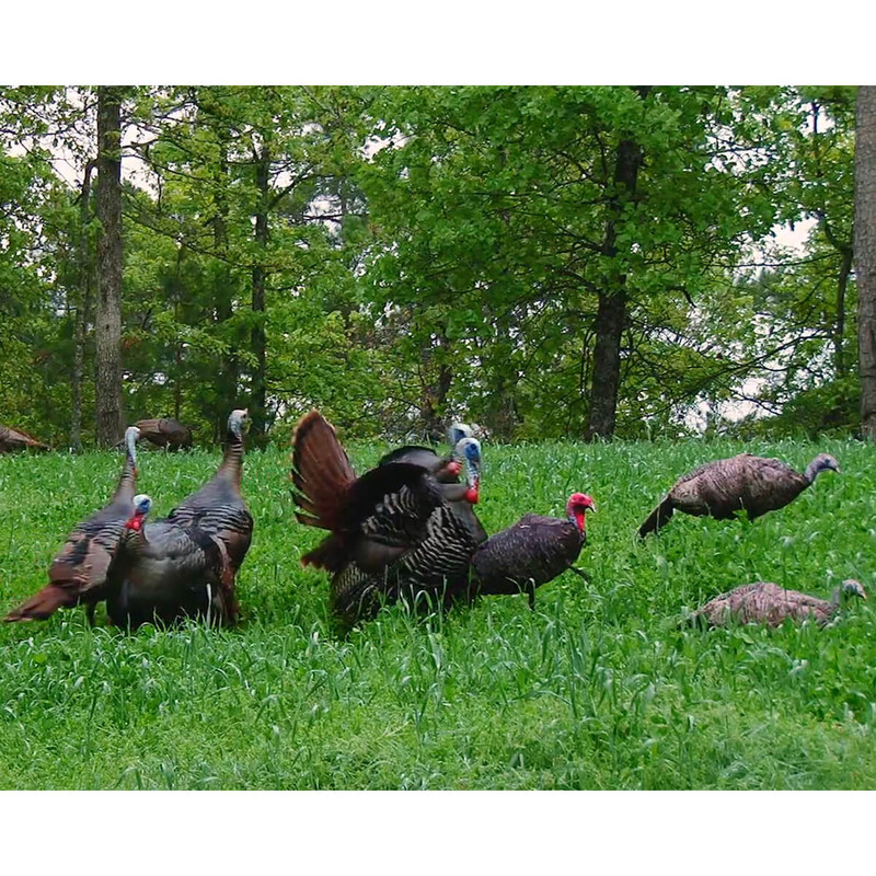 Montana Jake Purr-Fect 3D Jake Turkey Decoy