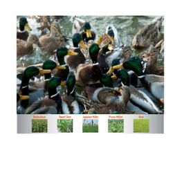 Mack's Attract Duck Forage Food Plot Seed - 20lb