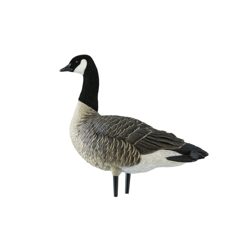 Avian-X AXP Outfitter Lesser Canada Painted Decoys - 12 Pack