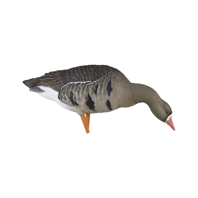 Avian-X AXP Fusion Specklebelly Goose Decoys - 6 Pack